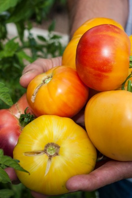 Keith Tomatoes_4